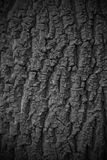 Tree bark texture background seamlessly tileable Stock Photos