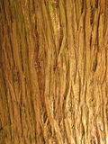 Tree bark texture. For background or wallpaper Stock Image