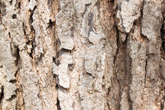 Tree bark texture background. Yellow old worn brick wall texture background. Vintage effect Royalty Free Stock Photos