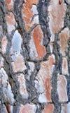 Tree bark texture. Beautiful texture of pine tree bark Royalty Free Stock Image