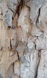 Tree bark texture. Brown gray white tree bark Stock Images