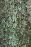 Tree bark texture Stock Photos