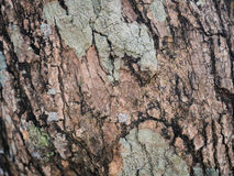 Tree bark texture. Close up Stock Image