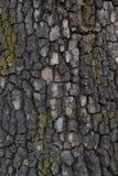 The tree bark Stock Photos