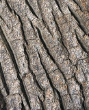 Tree bark texture - detail Stock Photography