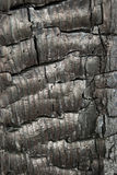 Tree bark texture - detail Stock Photos