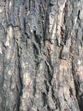 Tree bark texture detail close up Stock Image