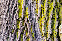 Tree bark texture with detail of moss and lichen on wooden fence Stock Photography