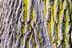 Tree bark texture with detail of moss and lichen on wooden fence Stock Photos