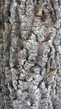 Tree bark. Texture of a tree bark with details Stock Photo