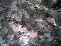 Tree Bark Texture. This tree had amazing visual texture and appeal stock images