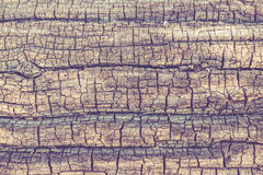 Tree bark texture. Highly detailed tree bark texture stock photography