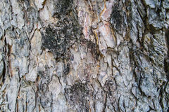 Tree bark texture Royalty Free Stock Photo