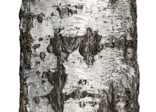 Tree bark texture isolated on white, birch wood Stock Photo