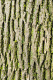 Tree Bark Texture with Lichen Royalty Free Stock Photo