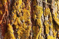 Tree bark texture with moss Stock Photos