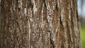 Tree bark texture stock video