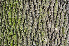 Tree bark texture Stock Image