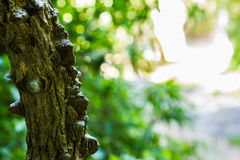 Tree bark texture for nature on background. Royalty Free Stock Photography