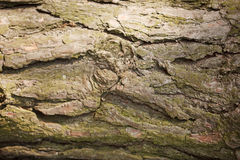 Tree bark texture. Nature wood background Stock Photos