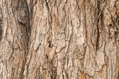 Tree bark texture. Nature wood background. The old weathered wooden background Stock Photography
