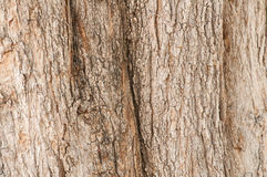 Tree bark texture. Nature wood background Royalty Free Stock Images