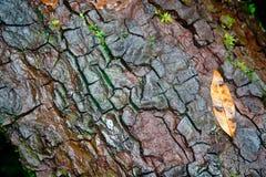 Tree bark texture Stock Photography