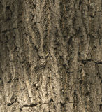 Tree bark texture. Old Wood Tree Texture Background Pattern. Hig Royalty Free Stock Photos