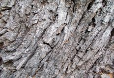 Tree bark texture patterns,wood rind for backgrounds.decoration,cortex. Wooden, , , art, abstract, aging, aged, vintage, antique, backdrop, detail royalty free stock photo