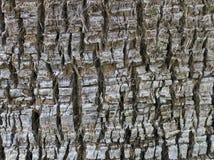 Tree bark texture photo Royalty Free Stock Photos