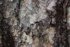 Tree bark texture. Photo of tree bark texture, clousup Royalty Free Stock Images