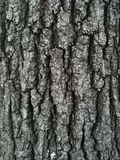 Tree Bark. Texture shot of tree bark Royalty Free Stock Photography