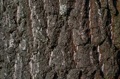 Tree bark texture with some moss. Tree bark texture with some pieces of moss Stock Photos