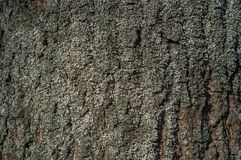Tree bark texture with some moss. Tree bark texture with some pieces of moss Stock Images