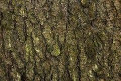 Tree bark. Texture of tree bark spruce royalty free stock image