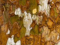 A tree bark texture surface Royalty Free Stock Photography