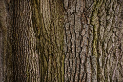Tree bark. Texture tree bark tree trunks stock photography