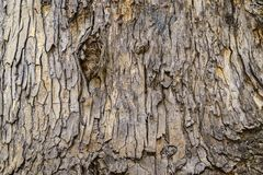 Tree bark texture use background royalty free stock photos
