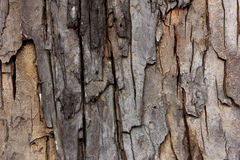 Tree bark texture, wallpaper and background Stock Photo