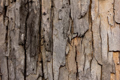 Tree bark texture, wallpaper and background Stock Photos