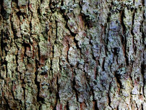 Tree bark texture wallpaper Royalty Free Stock Images