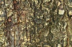 Tree bark texture wallpaper Royalty Free Stock Photography