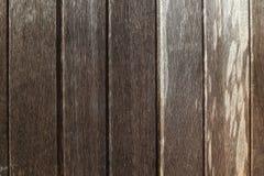 Tree bark texture wallpaper Stock Images