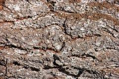Tree bark texture wallpaper macro Stock Images