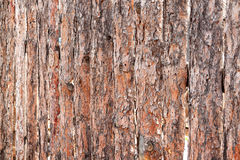 Tree bark texture wallpaper Royalty Free Stock Photography