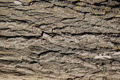 Tree bark texture Royalty Free Stock Image