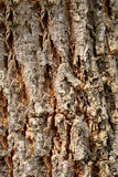 Tree bark texture weathered outdoor in the garden. Stock Images