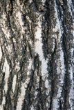 Tree bark texture. Wood texture Stock Image