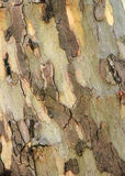 Tree bark. Textured tree bark, all over the page Stock Images