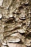 Tree bark Royalty Free Stock Images